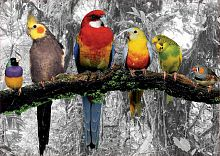 Puzzle Educa 500 pieces: Birds in the jungle