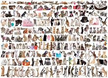Puzzle Eurographics 1000 pieces: the World of cats
