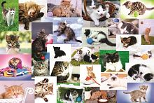 Trefl puzzle 60 pieces: Cat world