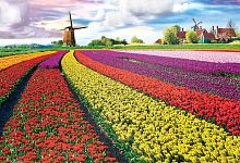 Puzzle Eurographics 1000 pieces: Tulipanova fields, Netherlands