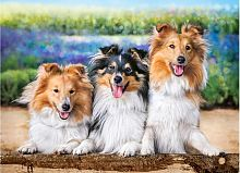 Puzzle Castorland 200 items: Sheltie in Lavender garden