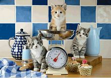 Schmidt puzzle 500 pieces: Kittens in the kitchen