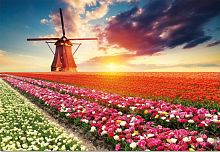 Jigsaw puzzle Educa 1500 parts: Landscape, Tulips