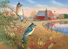 Cobble Hill puzzle 1000 pieces: Cedar waxwings