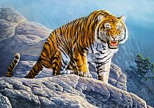 Puzzle Castorland 500 items: Tiger on the rocks