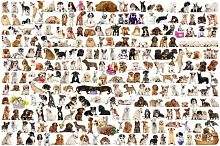 Jigsaw puzzle Eurographics 2000 details: the World of dogs