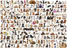 Puzzle Eurographics 1000 pieces: the World of dogs